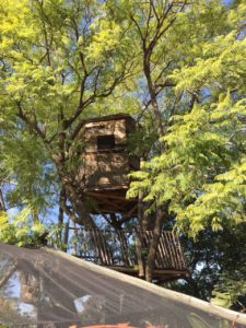 Tree house built by Antony